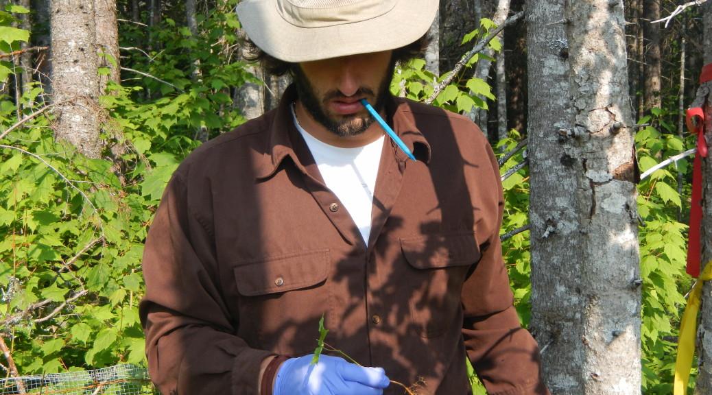 Solarik Sugar Maple Transplant into Boreal